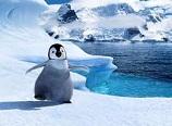 ペンギン赤ちゃん.jpg